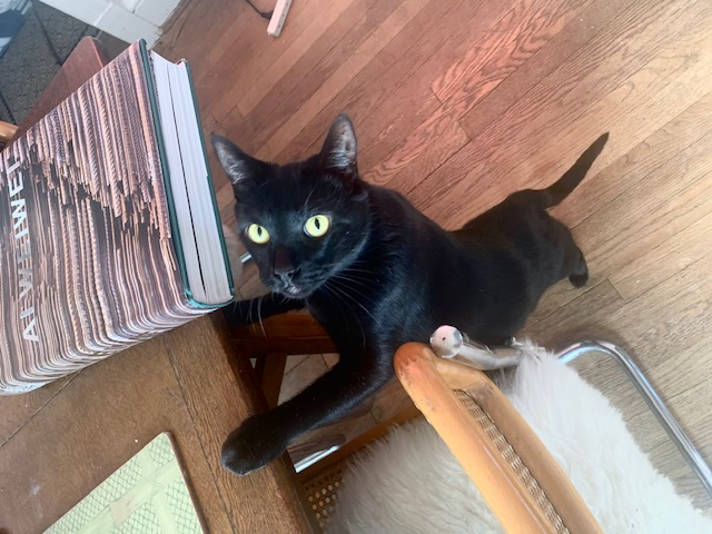 black cat with green eyes named Spike | Business Development Specialist Torx Media
